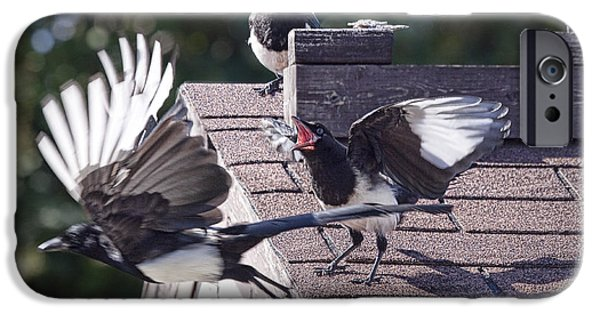 Magpies iPhone Cases - Magpie dispute iPhone Case by Randall Nyhof