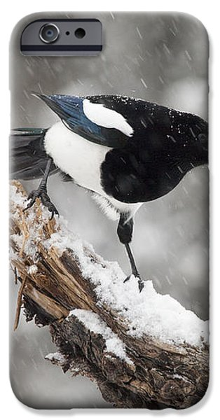 Magpie Out on A Branch iPhone Case by Tim Grams