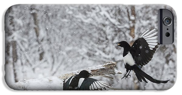 Magpies iPhone Cases - Magpies Dropping in for Lunch iPhone Case by Tim Grams