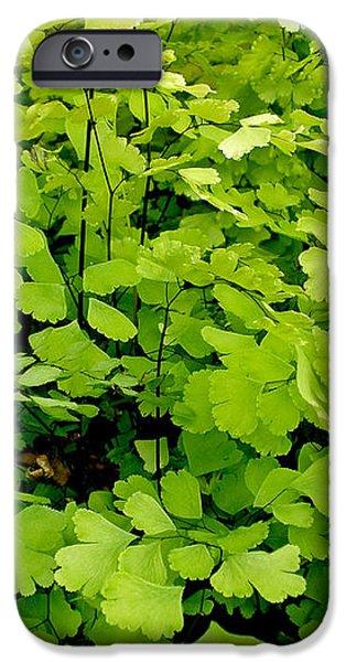 Maidenhair Fern iPhone Case by Kaye Menner