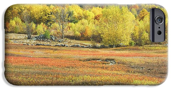 Blueberries iPhone Cases - Maine Blueberry Field -Fall Folige - Forest iPhone Case by Keith Webber Jr