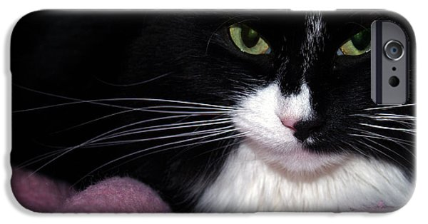 Housecat iPhone Cases - Maine Coon Eyes with Pink Blanket iPhone Case by Anna Lisa Yoder