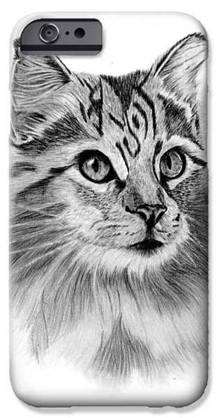 Maine Drawings iPhone Cases - Maine Coon iPhone Case by Sarah Dowson