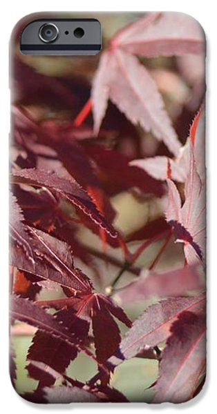 Maine Maple Leaves iPhone Case by Lena Hatch
