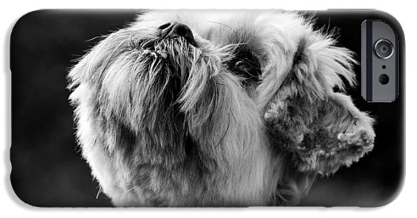 Dog Photograph Canvas iPhone Cases - Maisie iPhone Case by Chris Whittle
