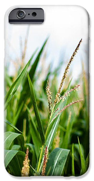 Maize on the field iPhone Case by Frank Gaertner