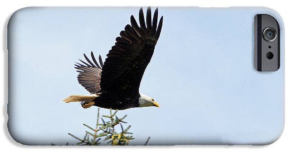 Flight Pyrography iPhone Cases - Majestic Flight iPhone Case by Shoal Hollingsworth