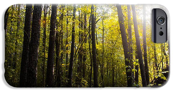 Autumn iPhone Cases - Majestic Forest iPhone Case by Shelby  Young