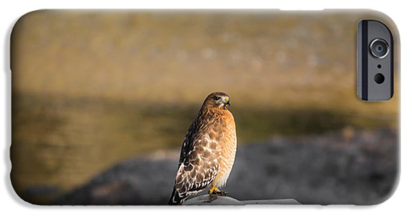 Autumn iPhone Cases - Majestic Hawk 2 iPhone Case by Shelby  Young