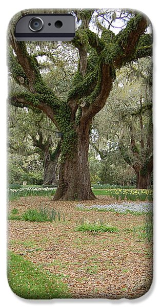 Majestic Live Oaks in Spring iPhone Case by Suzanne Gaff