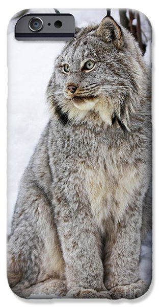 Majestic Moment iPhone Case by Inspired Nature Photography By Shelley Myke