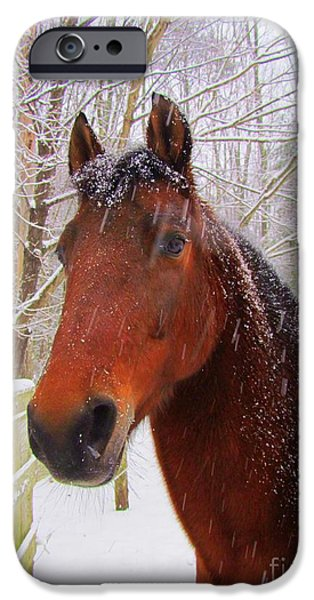 Winter Storm iPhone Cases - Majestic Morgan Horse iPhone Case by Elizabeth Dow