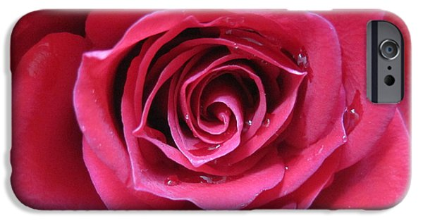 Flora Drawings iPhone Cases - The Eye of a Pink Rose iPhone Case by Tara  Shalton