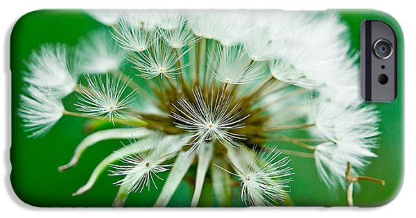 Arkansas iPhone Cases - Make a Wish iPhone Case by Annette Hugen