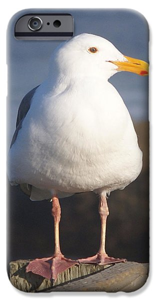 My Ocean iPhone Cases - Make Sure You Get My Good Side iPhone Case by Barbara Snyder