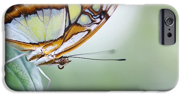 Insects Photographs iPhone Cases - Malachite Butterfly iPhone Case by Tim Gainey