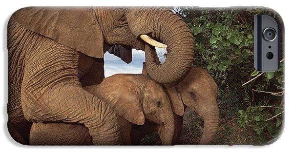 David iPhone Cases - Malalka Mothering Orphans Tsavo Kenya iPhone Case by Gerry Ellis