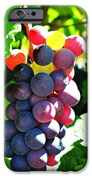 Malbec iPhone Cases - Malbec iPhone Case by Emily Fidler