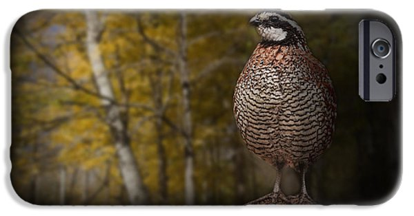 Gamebird iPhone Cases - Male Bobwhite Quail iPhone Case by Randall Nyhof