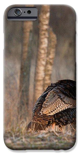 Male Eastern Wild Turkeys iPhone Case by Linda Freshwaters Arndt