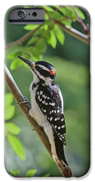 Hairy Woodpecker iPhone Cases - Male Hairy Woodpecker Picoides Villosus iPhone Case by Kenneth Whitten