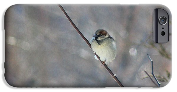 Wintertime iPhone Cases - Male House Sparrow in Winter iPhone Case by Karen Adams