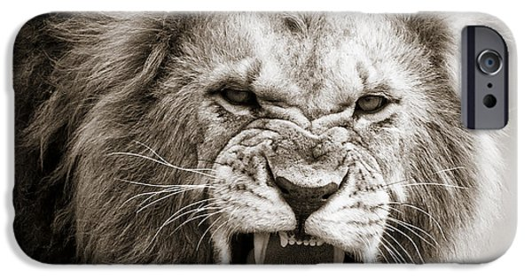 Masai Mara Photographs iPhone Cases - Male Lion I Masai Mara Kenya iPhone Case by Regina Mueller