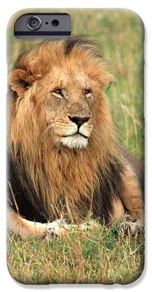 Male Lion On The Masai Mara iPhone Case by Aidan Moran