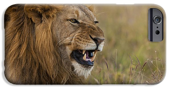 Simple Beauty In Colors iPhone Cases - Male Lion Snarling In Ol Pejeta iPhone Case by Ian Cumming