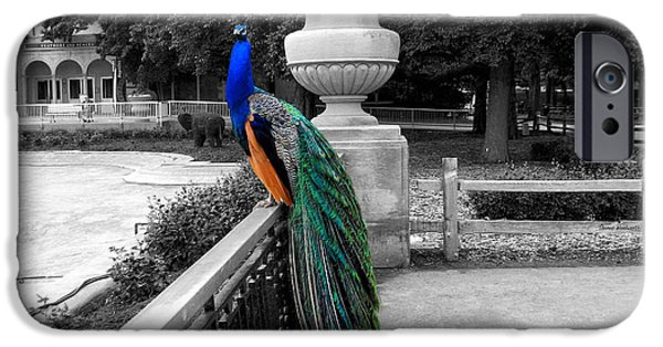 Central Il iPhone Cases - Male Peacock Bird Selective Coloring iPhone Case by Thomas Woolworth