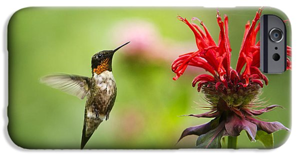Hummingbird iPhone Cases - Male Ruby-Throated Hummingbird Hovering Near Flowers iPhone Case by Christina Rollo