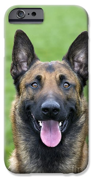 Recently Sold -  - Dog Close-up iPhone Cases - Malinois, Belgian Shepherd Dog iPhone Case by Johan De Meester