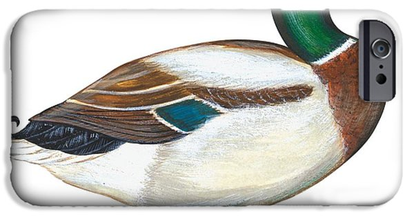 Zoology Paintings iPhone Cases - Mallard duck iPhone Case by Anonymous