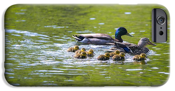 Baby Bird iPhone Cases - Mallard Duck Family iPhone Case by Diane Diederich