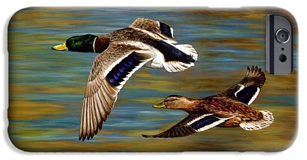 Hunting Bird iPhone Cases - Mallard Ducks iPhone Case iPhone Case by Crista Forest