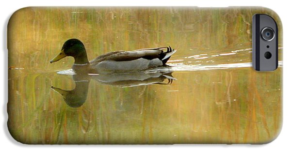 Fog Mist iPhone Cases - Mallard in the Morning iPhone Case by Karen Cook