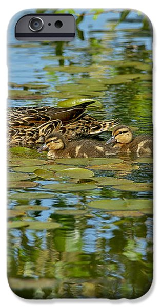 Mallard Mom and the Kids iPhone Case by Sharon  Talson
