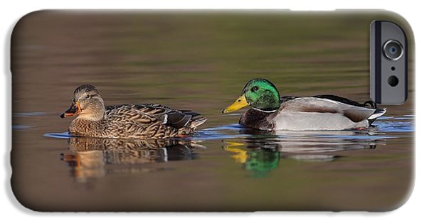 Water Colors Pyrography iPhone Cases - Mallard Pair iPhone Case by Daniel Behm