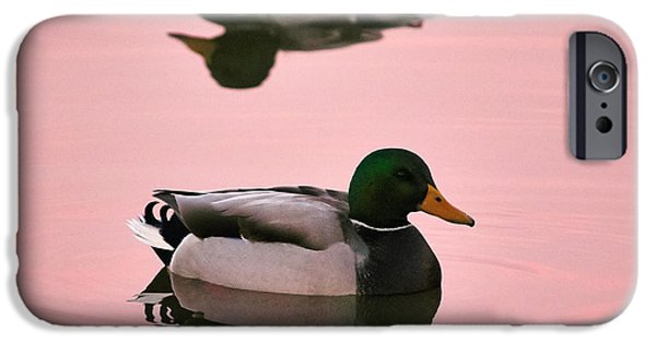 Lappi iPhone Cases - Mallards in pink iPhone Case by Jouko Lehto