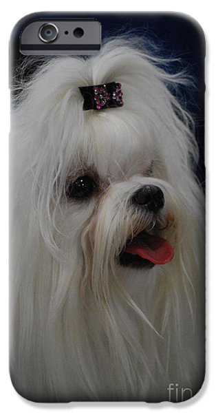 Maltese Puppy iPhone Cases - Maltese iPhone Case by DejaVu Designs