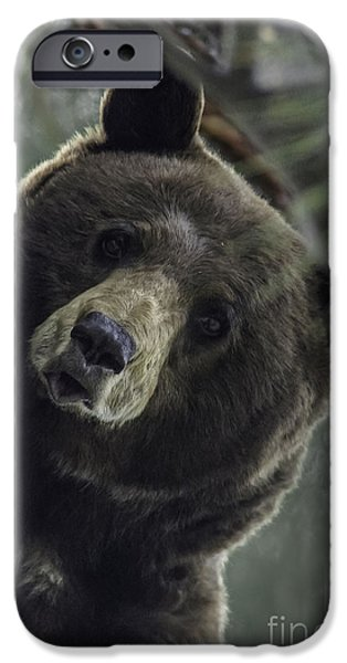 Born Adult iPhone Cases - Mama Bear iPhone Case by Mitch Shindelbower