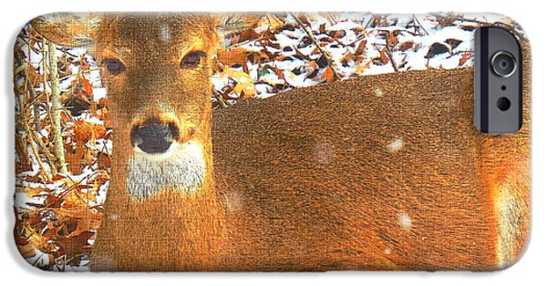 iPhone Cases - Mama Deer 2 iPhone Case by Shelly Weingart