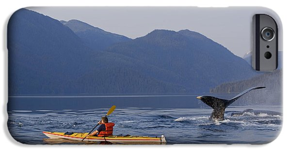 Tongass iPhone Cases - Man Sea Kayaking Near Swimming Pod Of iPhone Case by John Hyde