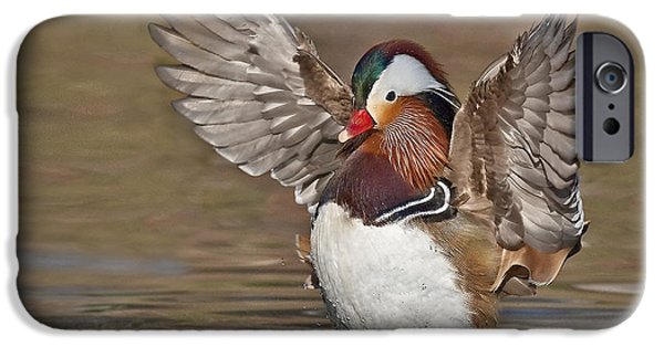 Bathing iPhone Cases - Mandarin Duck Flapping Away iPhone Case by Susan Candelario