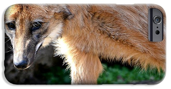 Gray Hair iPhone Cases - Maned Wolf iPhone Case by Deena Stoddard
