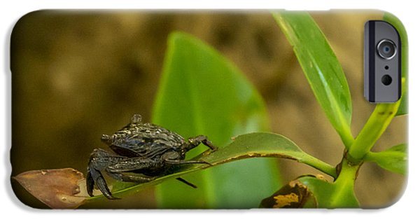 J N Ding Darling National Wildlife Refuge iPhone Cases - Mangrove Crab iPhone Case by Nancy L Marshall