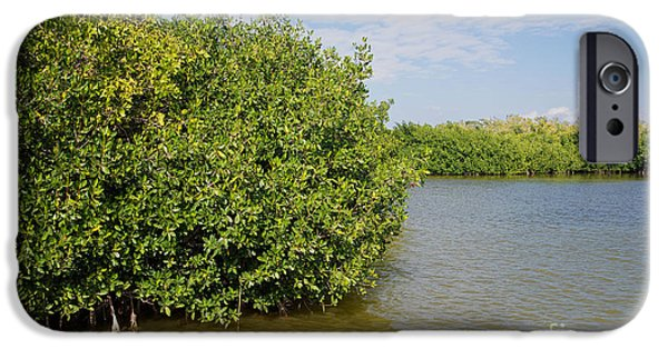 Best Sellers -  - Mangrove Forest iPhone Cases - Mangrove Fores iPhone Case by Carol Ailles