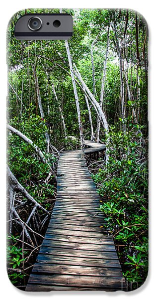 Mangrove Forest iPhone Cases - Mangrove forest in Colombia iPhone Case by Mariusz Prusaczyk