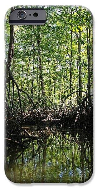 Mangrove Forest iPhone Cases - mangrove forest in Costa Rica 2 iPhone Case by Rudi Prott