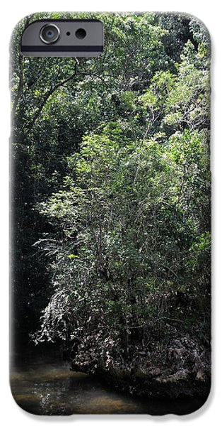 Mangrove Forest iPhone Cases - Mangrove forest is main part of the Los Haitises National Park Dominican Republic iPhone Case by Andrei Filippov